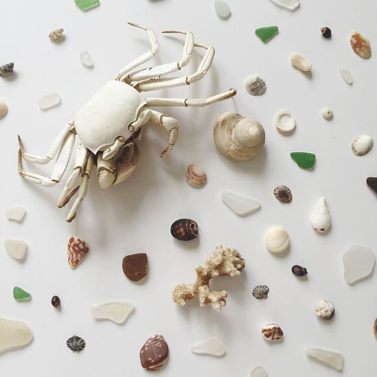 Beach Specimen Curio Treasure Tropical Hawaii Sea Beachlife Collector Crabshell White Crab Seaglass Flatlay Sea Life Shell Hunting Shells Seashells Crab White EyeEm Selects No People Large Group Of Objects High Angle View Table