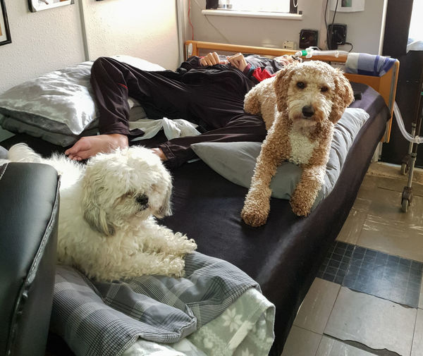 Pets Domestic Domestic Animals Mammal Dog Canine Relaxation Indoors  Home Interior