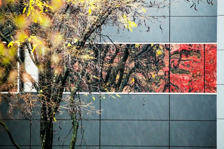 What Who Where Autumn Colors Reflections Reflection_collection Refautumn Reflection No People Building Exterior Eyeemphoto From My Point Of View Check This Out! Eyeem Gallary The Week On Eyem Popular EyeEm Gallery Popular Photos Creativity Beauty In Nature Beautiful Colors Minimalist Architecture The Graphic City