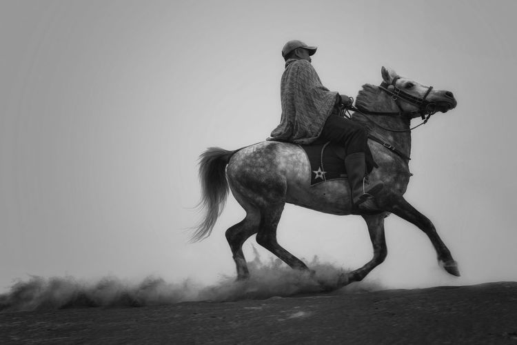 BROMO, INDONESIA - May 9 ,.2018. Unidentified local people or Bromo Horseman riding horse at the mountainside of Mount Bromo, Semeru, Tengger National Park, Indonesia. Activity Animal Wildlife Domestic Domestic Animals Herbivorous Horse Land Livestock Mammal Men Nature Outdoors People Pets Ride Riding Sky Vertebrate Working Animal