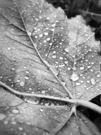 Damp Leaf Water Nature Close-up