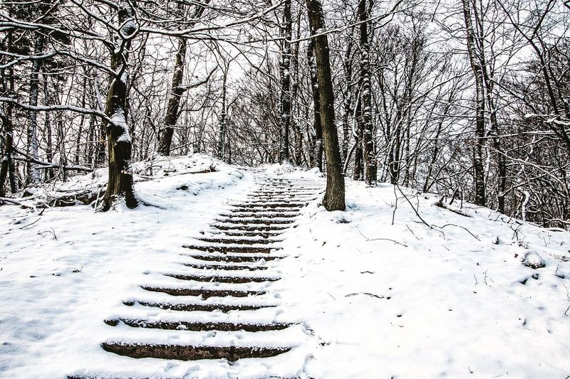 EyeEmNewHere Canon Snow Winter Nature Tree Forest Canonphotography Canon 70d Wideangle