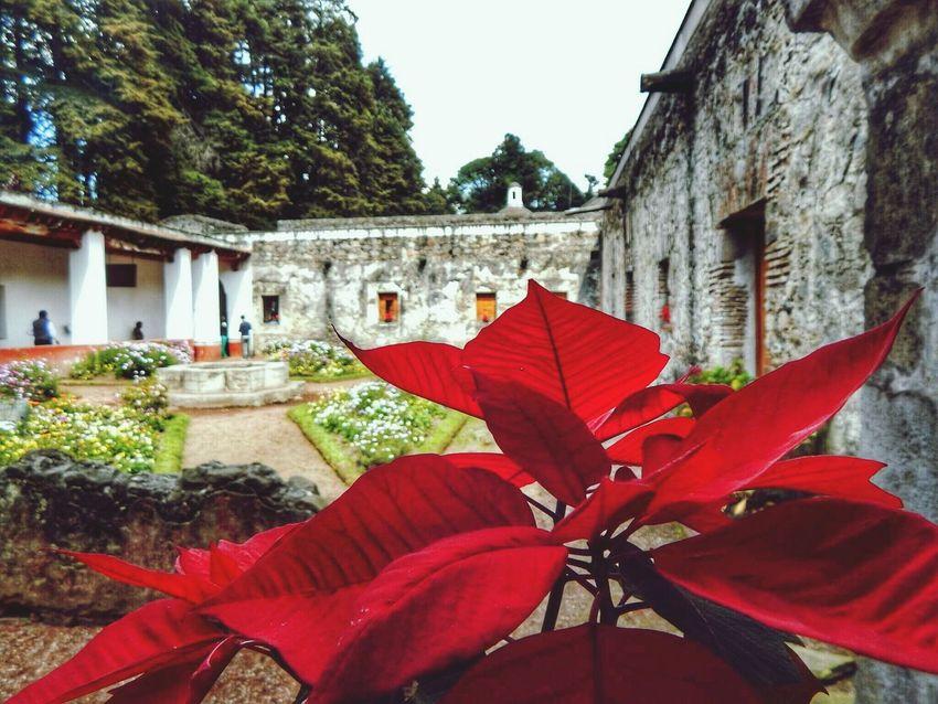 Feliz la Nochebuena. Desierto De Los Leones. Mexico Convento