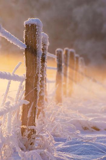 Frozen Close-up