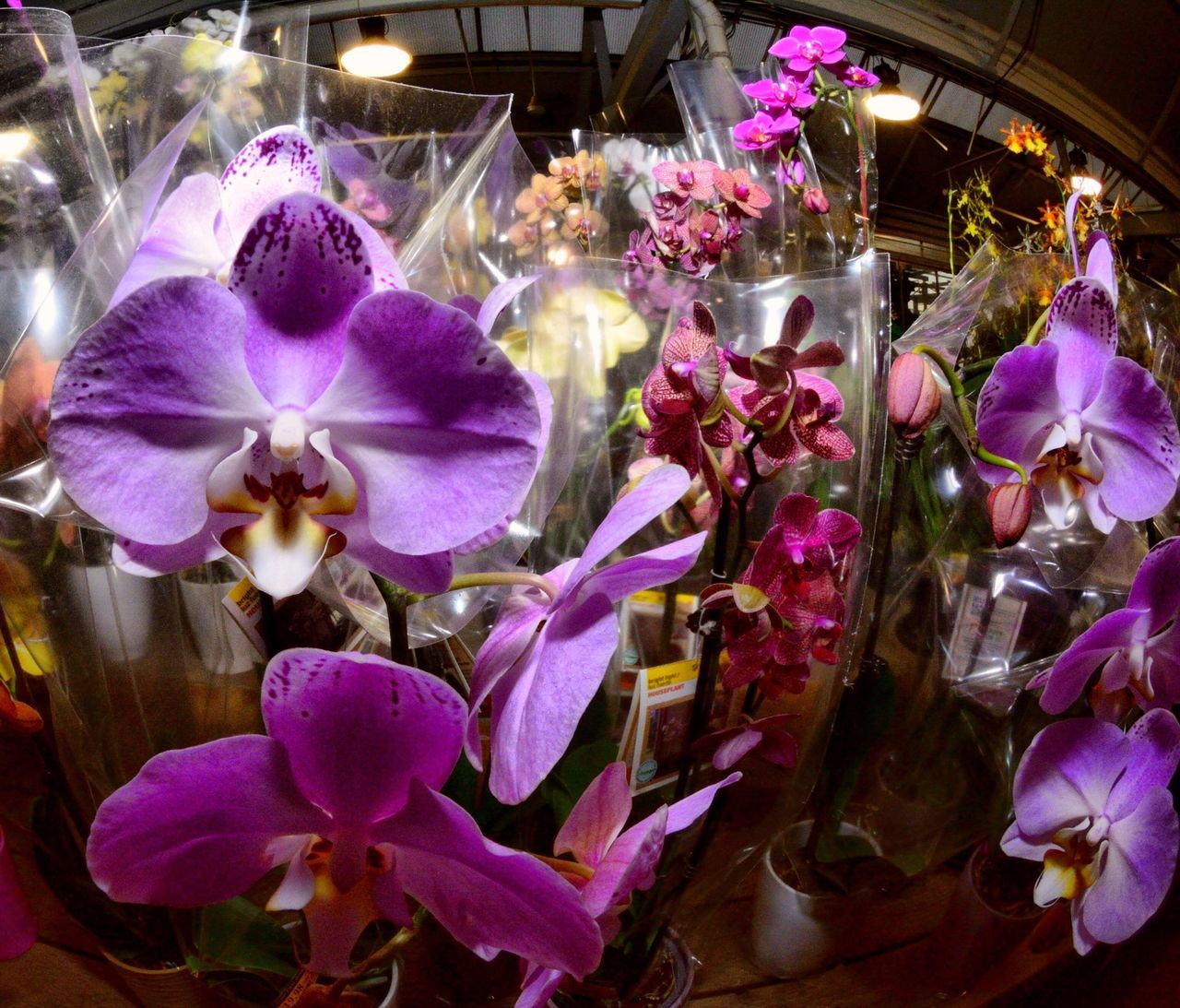 Close-Up Of Fresh Orchid Bouquets In Shop
