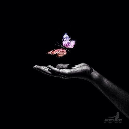 Butterfly Butterfly Still Life Colorkey Blackandwhite Black & White Romantic Fantasy Hand Light And Shadow