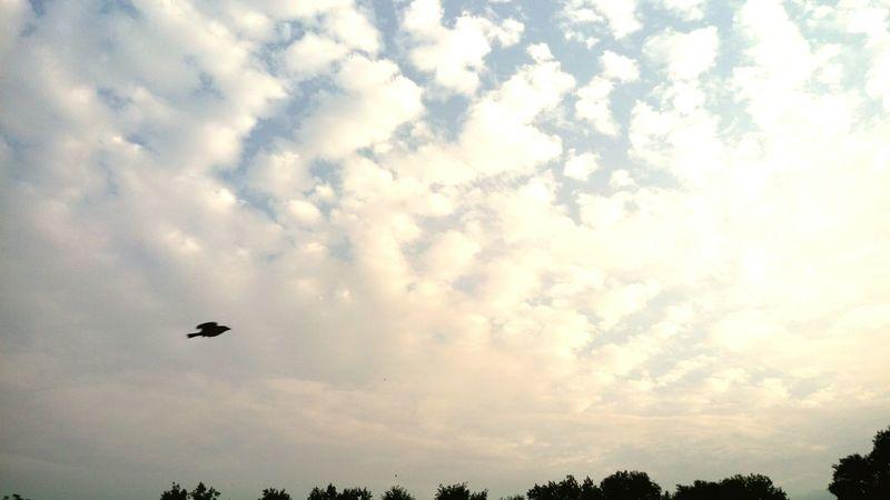 Fly towards your origin @ Haredasht Lisar Talesh Guilan Iran ... Nature Sky And Clouds Bird Flying Bird Sun Sunlight Sunlit Beauty