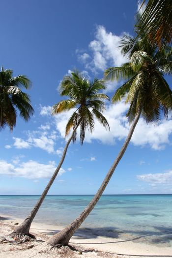 Caribbean Palm Trees Isla Saona Beauty In Nature Cloud - Sky Day Nature No People Outdoors Palm Tree Saona Island Scenics Sky Tranquility Tree An Eye For Travel