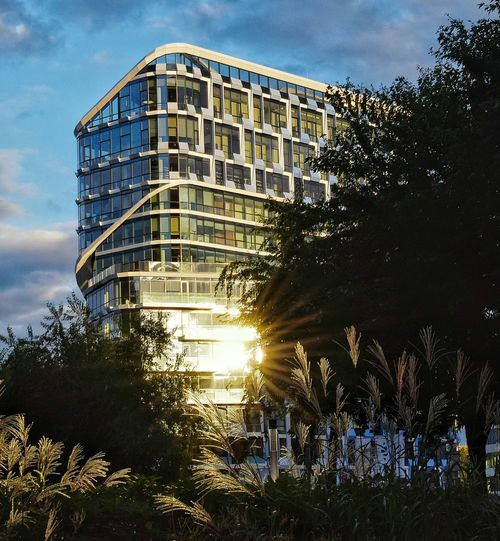 Tree Building Exterior Architecture Built Structure Outdoors No People Sky City Sunset Nature Day Amsterdam Zuidas