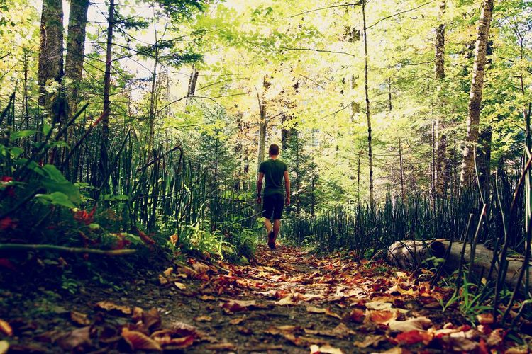 Wandering in the woods Forest Wander Wandering Woods Walking Around Walking Lost In The Landscape Alone Fall Beauty Leaves Trail Leaf Full Length One Person Standing Autumn Day Walking Nature Real People Outdoors Beauty In Nature Tree