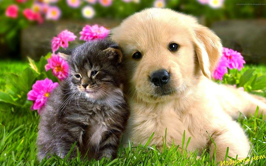 Dog Pets Animal Looking At Camera Cute Portrait Flower Young Animal Mammal Puppy Outdoors Domestic Animals Grass No People Togetherness Day Animal Themes Nature Fragility Close-up