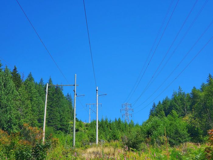 Plants and electricity pylon against sky