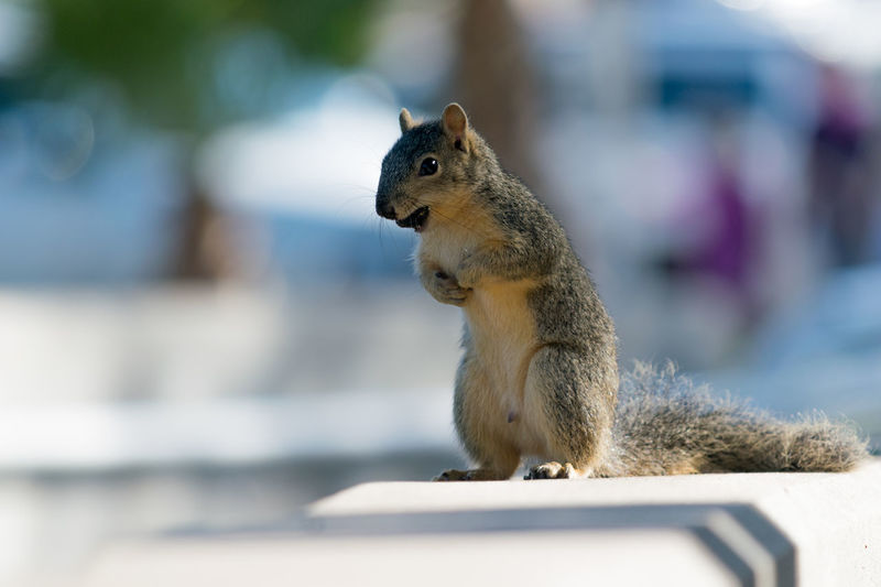 Squirrel eating on a ledge Animal Themes Animal Wildlife Animals In The Wild Day Mammal No People One Animal Outdoors Squirrel Squirrels