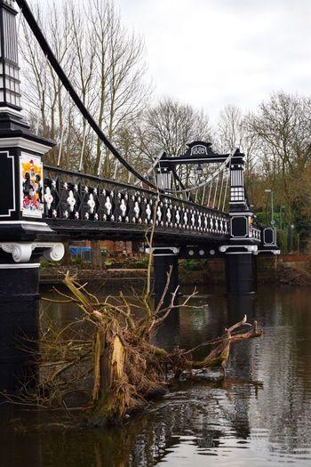 Bare Tree Riverside River River View Riverbank Bridge Bridge - Man Made Structure Ferry Bridge Tree Reflection Burton On Trent Staffordshire