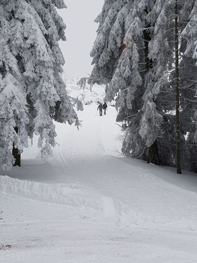 Winter Winter Walk Snow Day Blakforest Black Forest Schwarzwald Tree Snow Nature Winter Outdoors Beauty In Nature No People