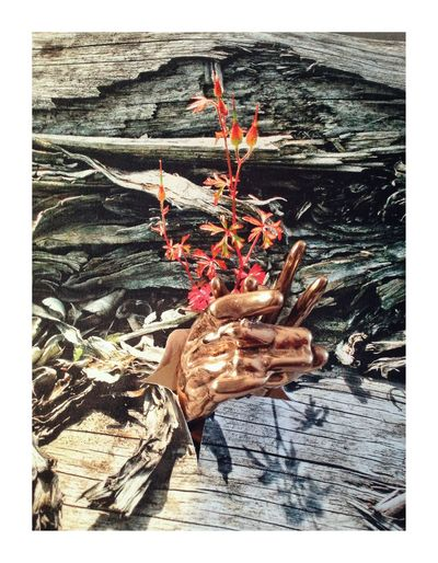 Résurrection Minimalism Conposition Nature Day Outdoors Hand Human Hand Holding Wood - Material Frame