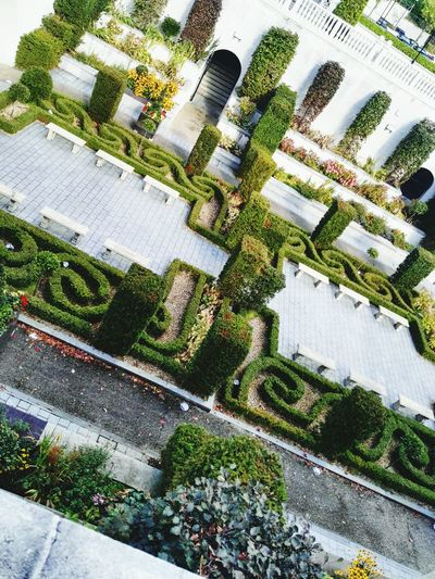 Green Throwback Ireland🍀 Powerscourt Enjoying Life Blooming Growth