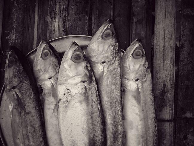 Fish Mackerel Mackerel Fish Close Up Close Up Photography Close Up Collection Close Up Fish Black And White Black And White Photography Black And White Collection  Black And White Fish