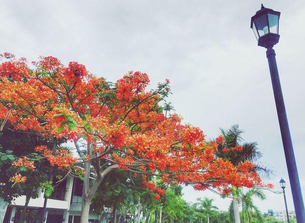 Orangetree Beauty In Nature