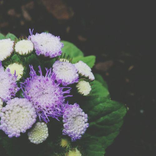 Makro Flower Power EyeEm Flower Nexus 5