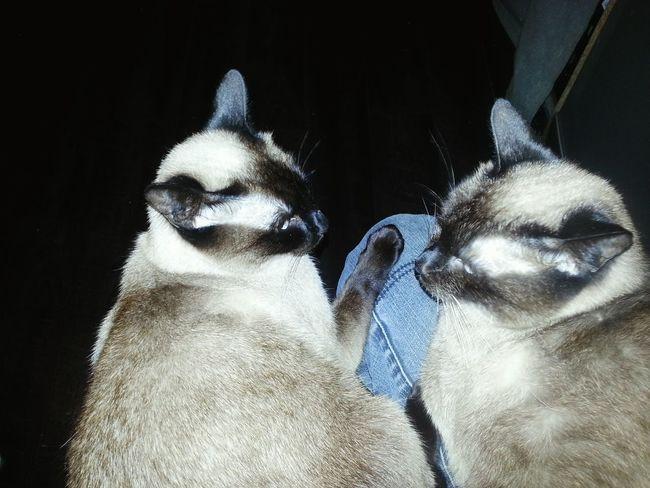 Cat♡ un amour de minoutes