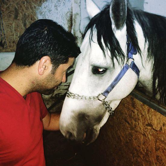 #horses #horse #horsesofinstagram #horseshow #horseshoe #horses_of_instagram #horsestagram #instahorses #wild#instagood #grass #field #farm #nature #pony #ponies #ilovemyhorse #babyhorse #beautiful #pretty #photooftheday #gallop #jockey #rider #riders #riding