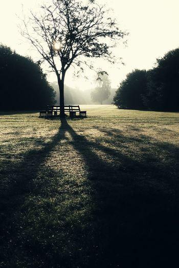 Tree Shadow Sunrise Morning