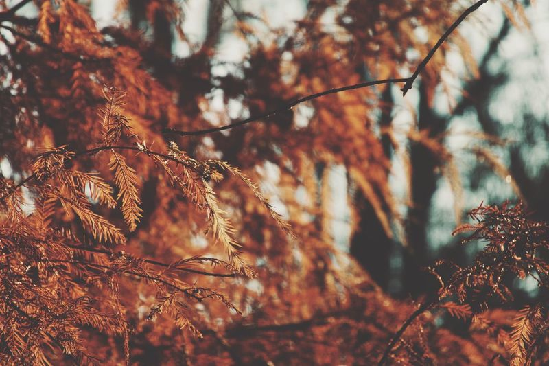 Plant Tree Growth Nature Branch Beauty In Nature No People Sunlight Vulnerability  Outdoors Selective Focus Land Fragility Tranquility Pinaceae Forest Close-up Day Focus On Foreground Low Angle View