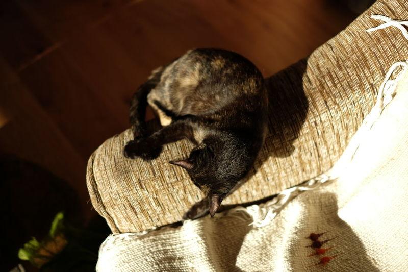 Cat Cats Cats Of EyeEm Pets