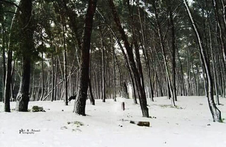 اليوم جموووووود مش طبيعي وثلوج علي المنطقة الشرقية Libya Banghzi Banghzi منطقه الشرقية ثلوج