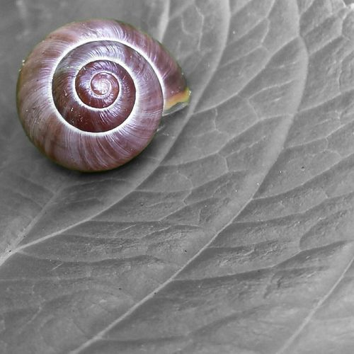 ..Sleeping Beauty.. Snail Snailshell Snail Collection Nature Photography Taking Photos Photoart Art EyeEm Nature Lover EyeEm Best Shots - Nature Connected With Nature
