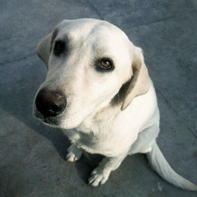 Love this dog ? Animalsaddict Natureaddict