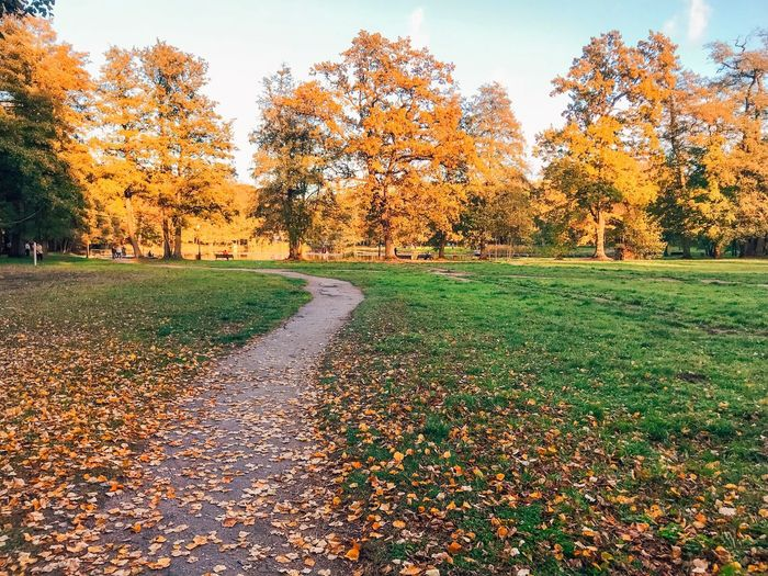 Plant Autumn Tree Beauty In Nature Nature Growth Grass Tranquility Tranquil Scene Park Orange Color Green Color Land No People Sky Day Change Leaf Field Plant Part
