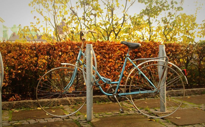 Tireless Fall Autumn colors No Tires Sweden Tree Bicycle Bicycle Rack Stationary Land Vehicle Sky Parking Tire Pedal Wheel