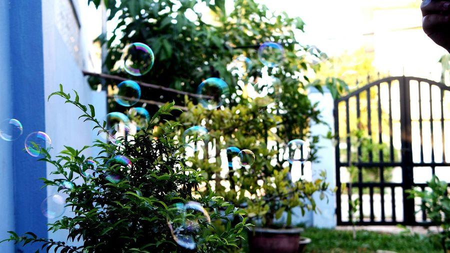Close-up of bubbles against plants