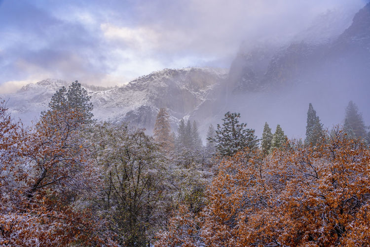 Yosemite national park, California winter background Yosemite National Park Yosemite Winter Background Falls Colors Colors Mountains Trees Orange Tree Orange Snow National Park Falling Leaves