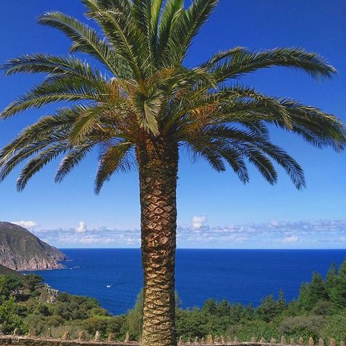 🌴🌅🌊 Last Northern holidays... 🌍🚐 Places Trip Northernland Beautifulwievs Sanandresdeteixido Landscape Palmtrees Bluesky Igers Scapes Withfriends Naturetreasures Holidays Nature Galifornia SPAIN Naturalplaces Galiciacalidade Hillside