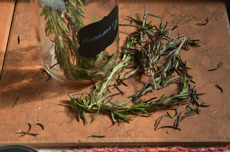 Rosemary herb, jar, black label on jar, on earth red tile Close-up Day Green Green Color Herb Herbs Jar Kitchen Label Leaf Multi Colored No People Plant Rosemary Rosemary Herb Still Life