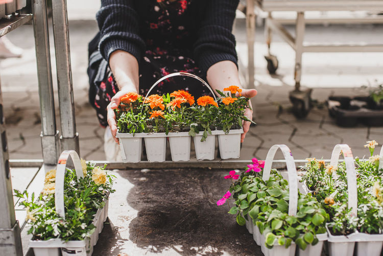 Woman holding pots of small fresh flowers