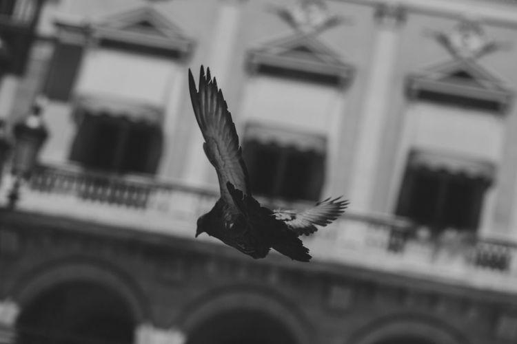 Bird flying in a building