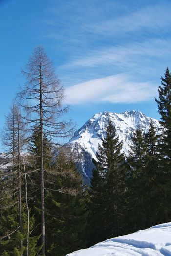 View on the Ennskraxn in Austria... not filterd Tree Snow Mountain Cold Temperature Winter Pine Tree Forest Pinaceae Ice Hockey Sky Snowcapped Mountain
