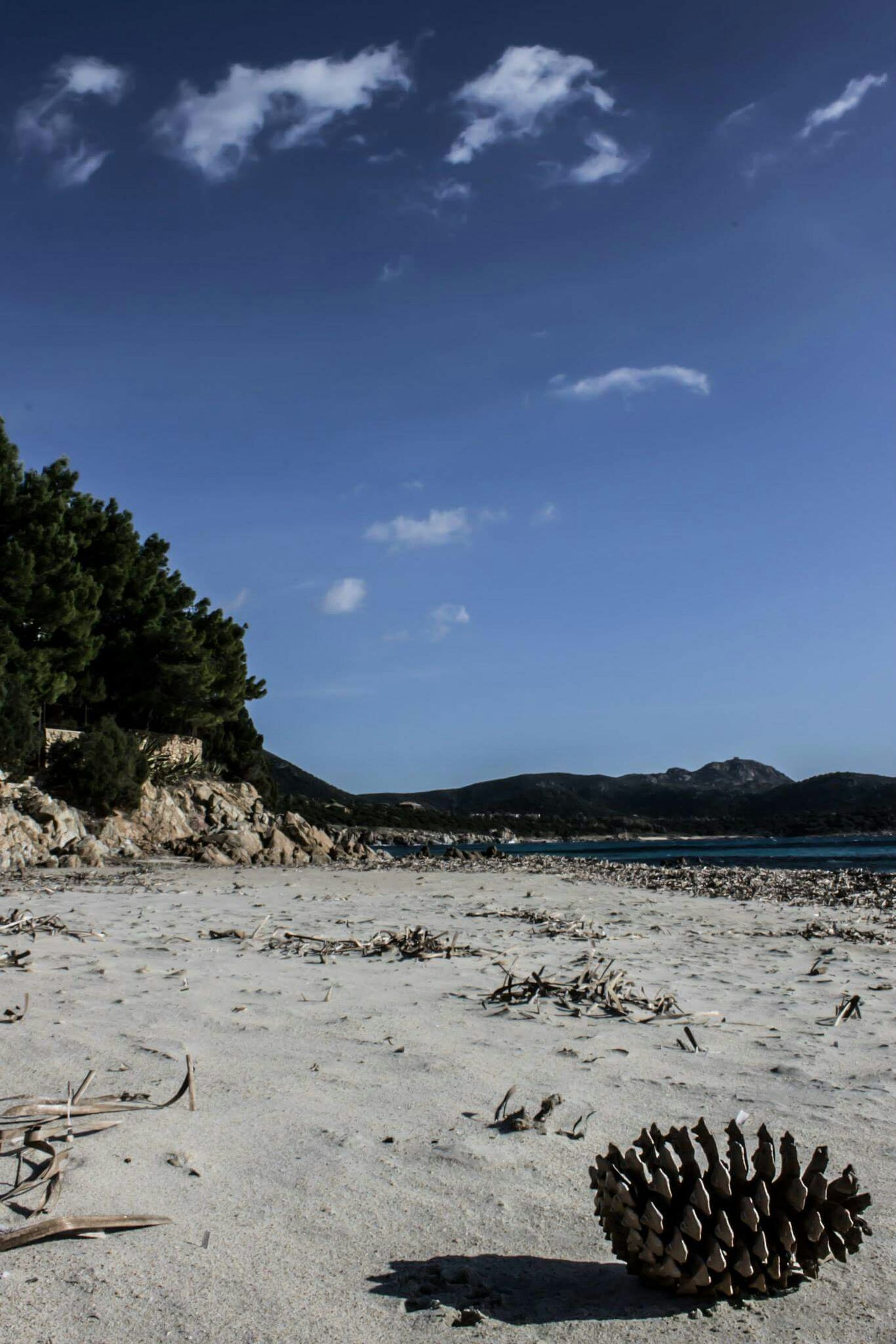 beach, water, tranquility, tranquil scene, sky, sand, nature, scenics, beauty in nature, shore, rock - object, tree, sea, day, outdoors, stone - object, sunlight, no people, non-urban scene, idyllic