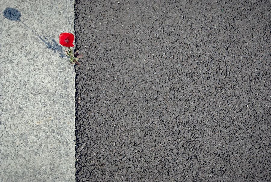 The nature may be stronger than the city. Nature abhors a vacuum. 📷 Nature Poppy Poppy Red Poppy Sidewalk Macadam Flower Flowerpower Deceptively Simple