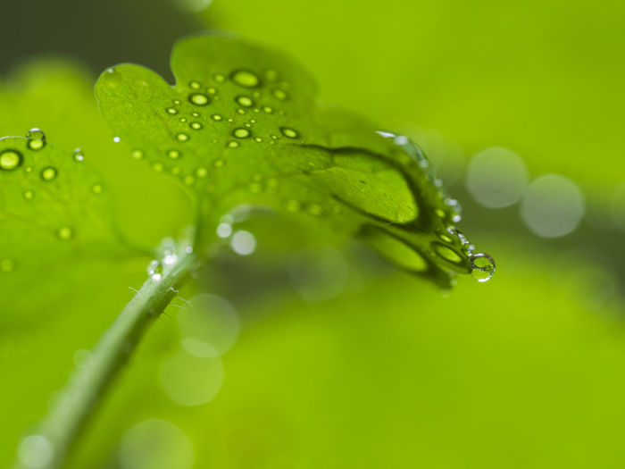Nature Beauty In Nature Blade Of Grass Close-up Dew Drop Fragility Green Color Leaf Leaves Makro Photography Nature No People Outdoors Plant Plant Part Rain RainDrop Rainy Season Reflections In The Water Reflektion Selective Focus Water Wet EyeEmNewHere