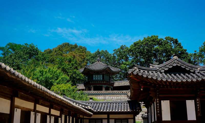 Naksonje Complex Architecture Tree Roof Built Structure Sky No People Tradition Travel Destinations Day Outdoors Building Exterior Nature Nature Landscape Landscape_Collection EyeEm Best Shots - Landscape Changdeokgung Palace South Korea Outdoor Photography Cloud - Sky Architecture Architecture_collection EyeEm Selects EyeEm Gallery EyeEmNewHere An Eye For Travel The Graphic City