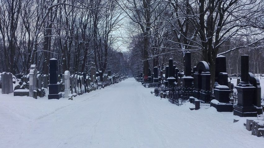 Jewish Cemetery of Warsaw Cemetery Jewish Jewish Cemetery Snow Winter Cold Temperature Weather Outdoors Snowing Tree