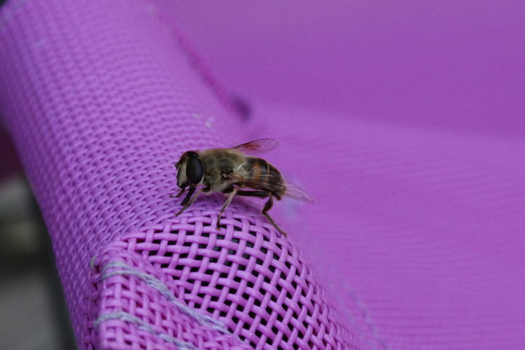Close-Up Of Honey Bee Perching On Woven Chair