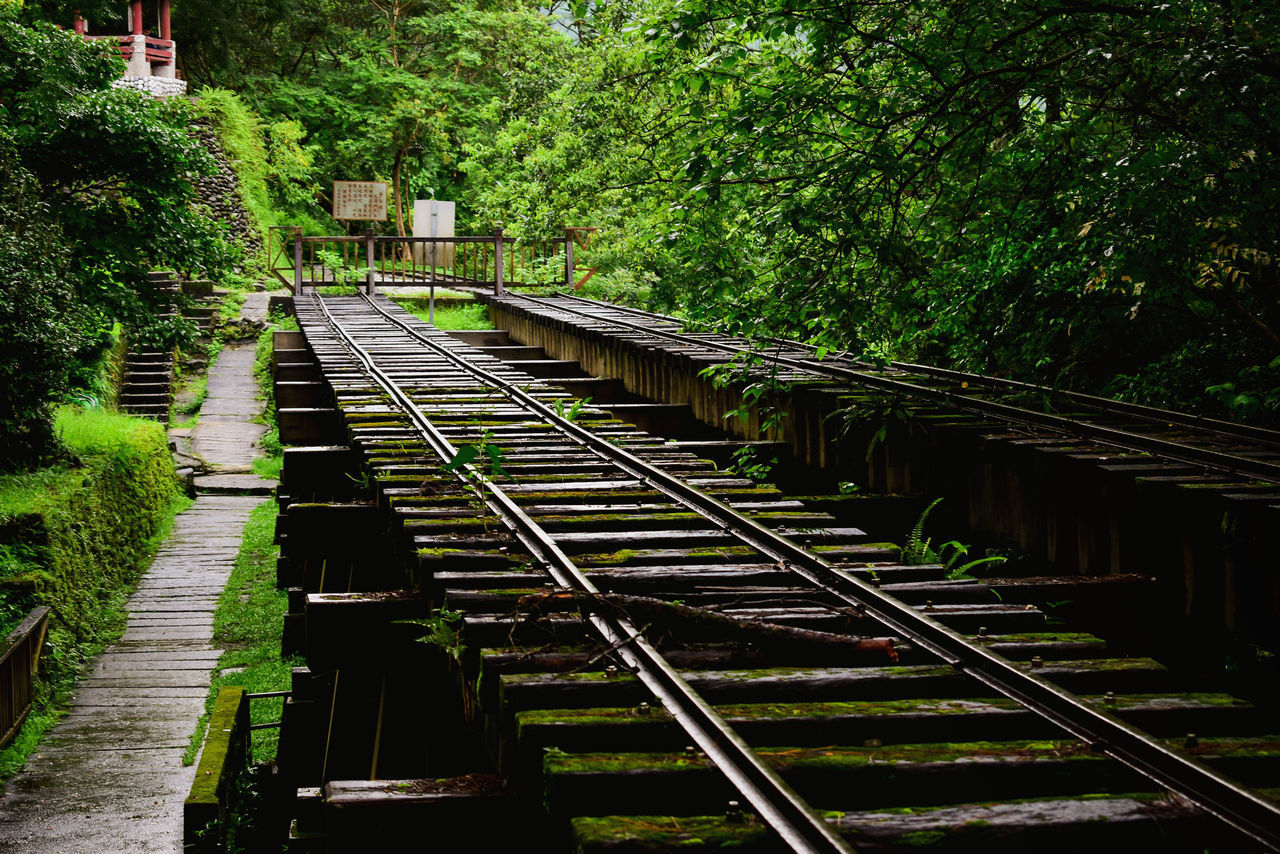 architecture, tree, built structure, plant, rail transportation, track, railroad track, transportation, no people, connection, nature, day, direction, green color, bridge, the way forward, outdoors, building exterior, growth, bridge - man made structure, long