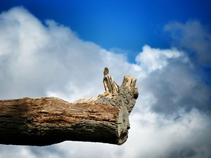 Low angle view of bird on dead tree against sky