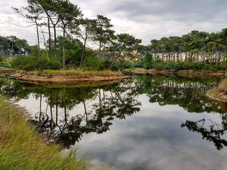 Reflection Tree Water Lake Nature Outdoors Cloud - Sky Landscape Sky No People City Tree Area Day Beauty In Nature Lège Cap Ferret Les Reservoirs Piraillan EyeEm Gallery EyeEm Best Shots EyeEm Nature Lover France🇫🇷 Beauty In Nature Reflecting Pool Tranquility